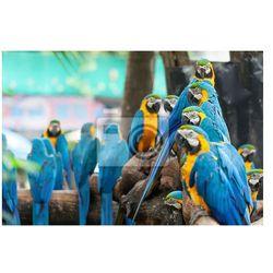 Fototapeta papuga