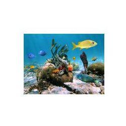 Foto naklejka samoprzylepna 100 x 100 cm - Życie pod wodą morską