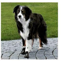 Walker Active - Ochronne buty dla psa - różne rozmiary Rozmiar:S-M