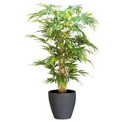 Drzewko Bambusowe 1500 Mm Dostarczany Z Czarną Donicą