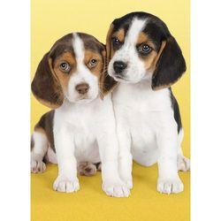 9-030356 Puzzle Śliczne pieski beagle