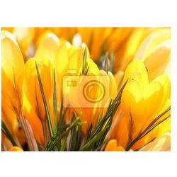 Fototapeta Bogate wiosenne kwiaty
