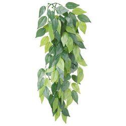 Roślina do terrarium
