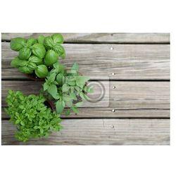 Fototapeta zioła
