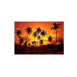 Foto naklejka samoprzylepna 100 x 100 cm - Palm kokosowego na piasku plaży w tropic na zachodzie słońca