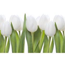 obraz białe tulipany 04