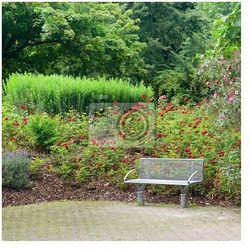 Fototapeta ławka w pięknym parku