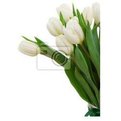 Fototapeta białe tulipany z bliska