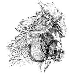 Fototapeta pony head