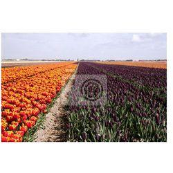Fototapeta Rolnictwo w Holandii