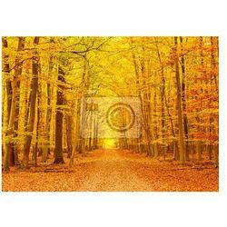 Fototapeta Ścieżka w parku jesienią