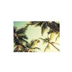 Foto naklejka samoprzylepna 100 x 100 cm - Palmy kokosowe i świeciło słońce na jasnym niebie