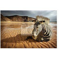 Fototapeta Plaża Zebra
