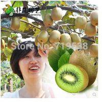100 seeds Kiwi fruit tree Seeds free shipping, DIY Home Garden