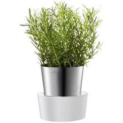 Auerhahn - pojedyńcza doniczka na zioła
