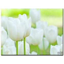 Obraz Białe tulipany 17-41