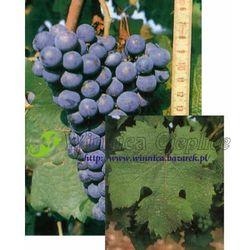 Carmenere sadzonka winorośli 100 rabat 10%