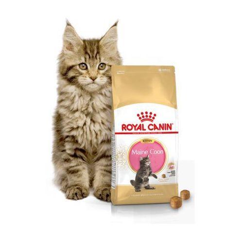 royal canin kitten maine coon 4kg por wnaj zanim kupisz. Black Bedroom Furniture Sets. Home Design Ideas