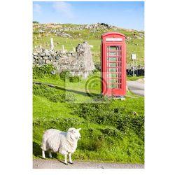 Plakat budka telefoniczna z owcami, Clashnessie, Highlands, Szkocja