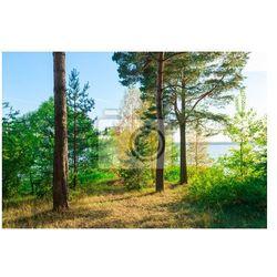 Fototapeta Evergreeny na piękny krajobraz jeziora