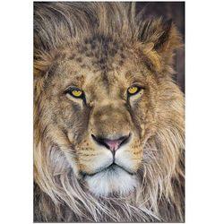 Fototapeta KOMAR 1-619 National Geographic Lion