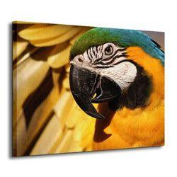 Papuga Arara - Obraz na płótnie