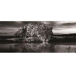 Fototapeta Panoramiczna Jaguar 218VEP Bezpłatna wysyłka kurierem od 300 zł! Darmowy odbiór osobisty w Krakowie.